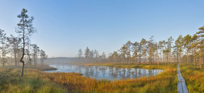 Sunrise at viru bog
