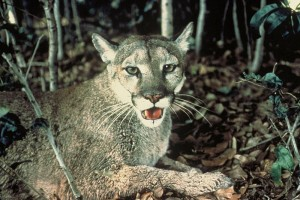 By U.S. Fish and Wildlife Service (http://images.fws.gov/) [Public domain], via Wikimedia Commons