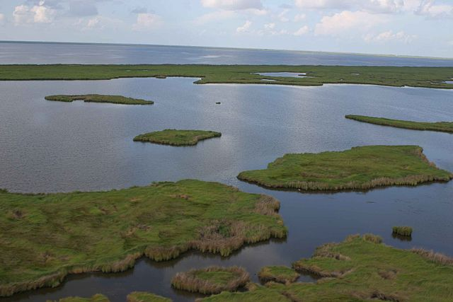 Aerial view of marsh
