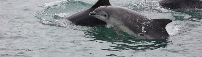 Cardigan Bay Marine Wildlife Centre