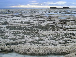 By Oregon State University - Bleached coral, CC BY-SA 2.0, https://commons.wikimedia.org/w/index.php?curid=50490719