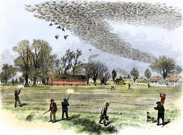 Passenger Pigeon Shoot