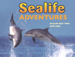 Sealife Adventures