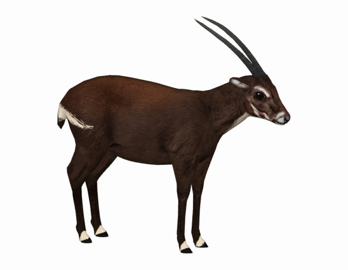How to save the Saola - Conservation Articles & Blogs - CJ