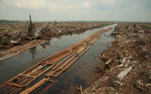 Deforestation Indonesia