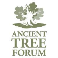 Ancient Tree Forum