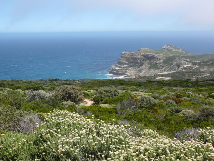 Cape Floristic
